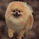 Pomeranian by Cazzie Cathcart