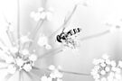 Through the eyes of the hoverfly by missmoneypenny
