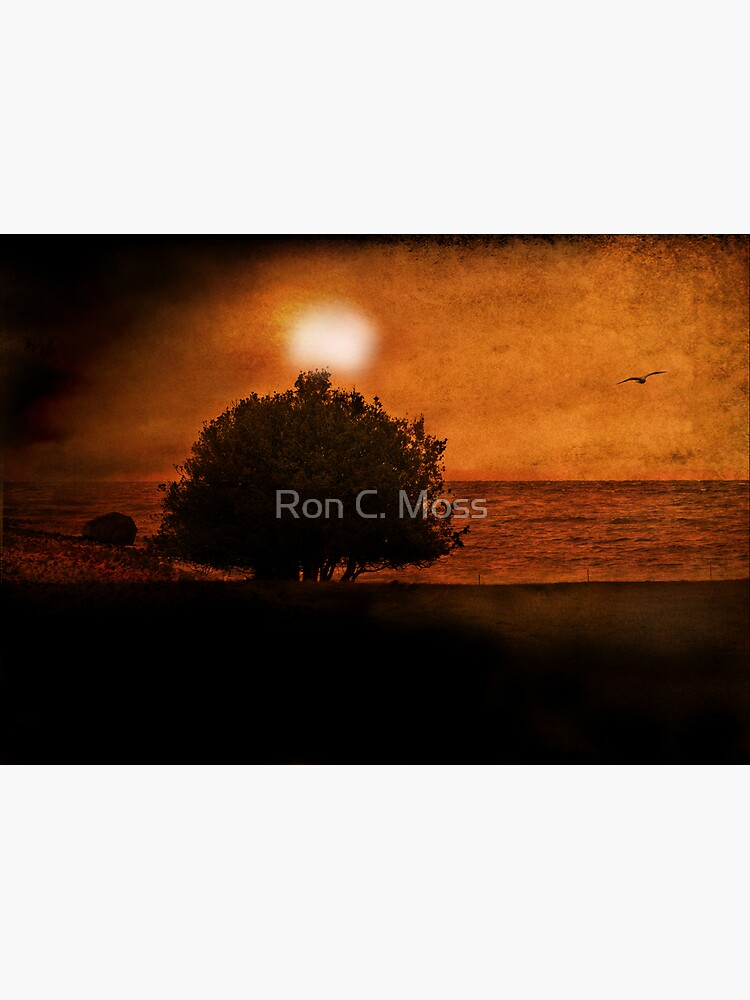 Out To Sea by ronmoss