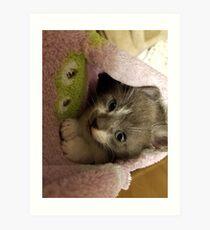 Adorable grey kitty  Art Print