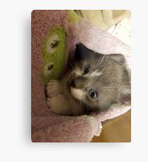 Adorable grey kitty  Metal Print