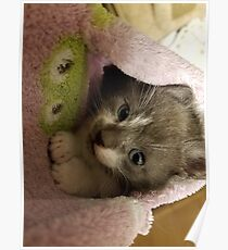 Adorable grey kitty  Poster