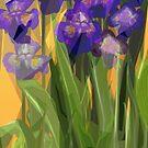 Irrepressible hope of Irises by Alma Lee