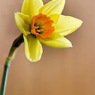 Narcissus by JEZ22
