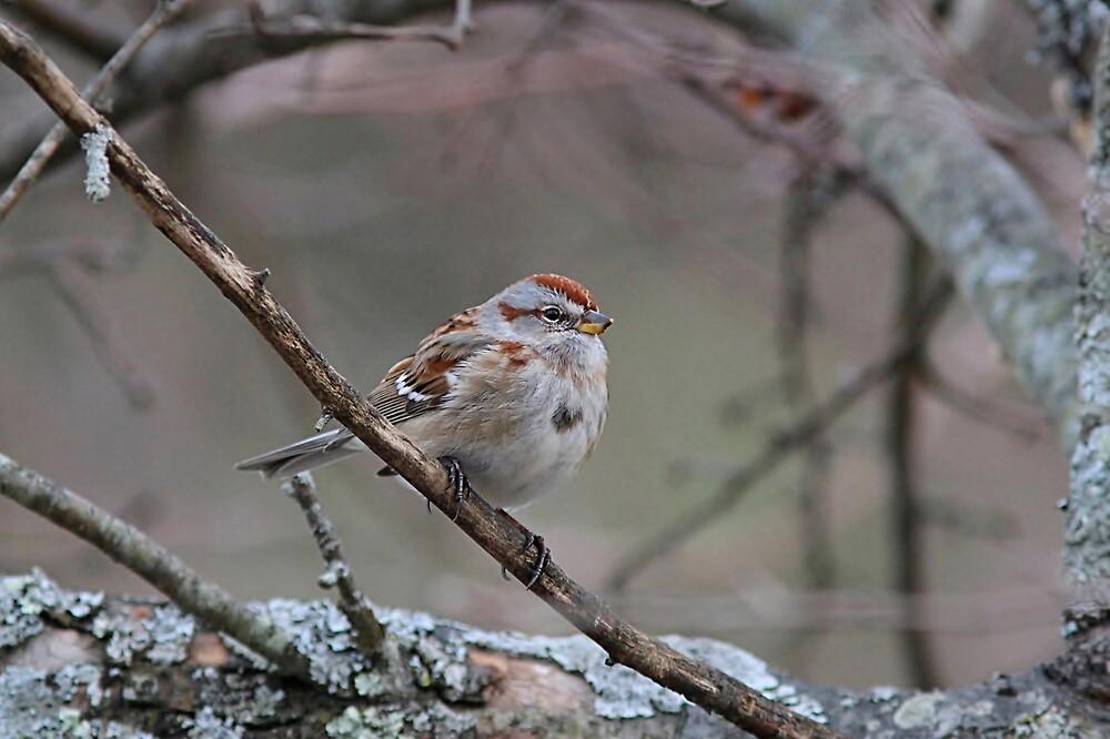 American tree sparrow by Linda Crockett