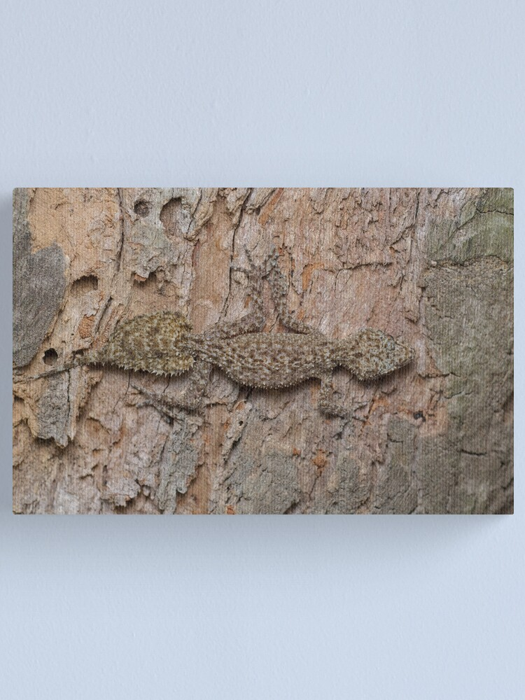Alternate view of Southern Leaf-tailed Gecko Canvas Print