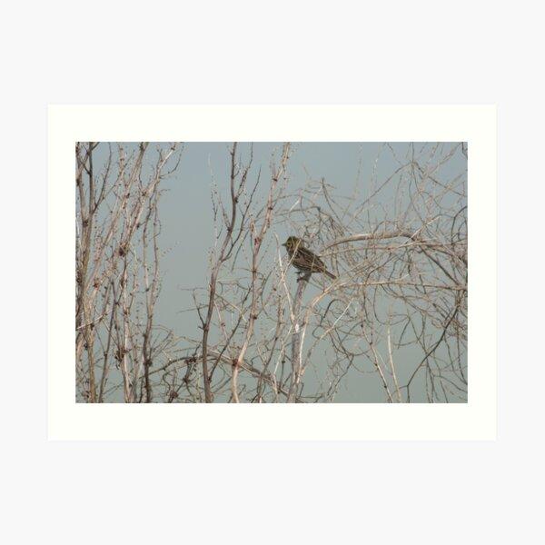 Small Bird in Shrub  Art Print