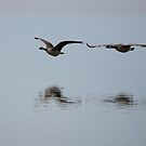 Canada Geese in Flight by Moonwater