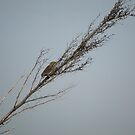 Bird sitting on branch by Moonwater
