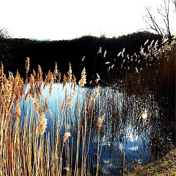 Pond by donnachapman