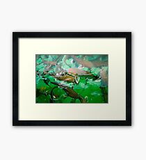 Catfish Framed Print