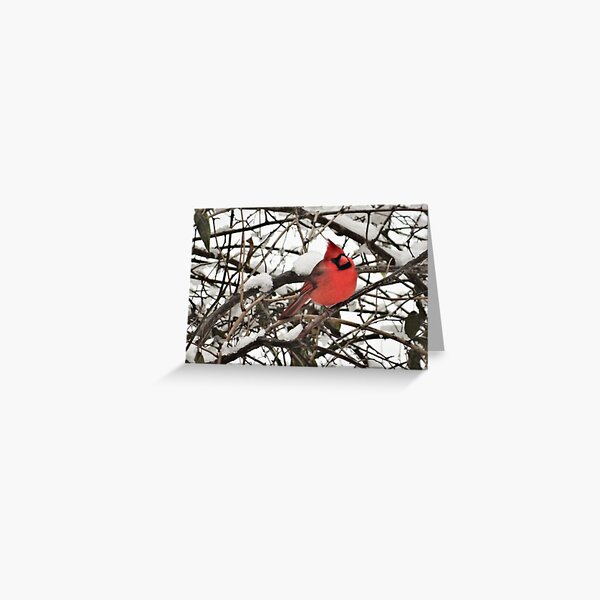 Northern Cardinal in snow on the Concord River Greeting Card