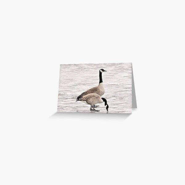 Canadian Geese on the Concord River Greeting Card