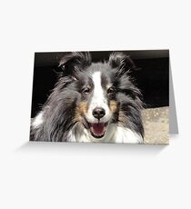 Sparky, the coolest Sheltie that ever lived! Greeting Card