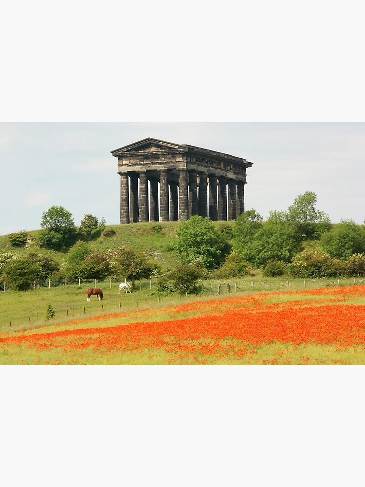 Poppies at Penshaw Monument, County Durham by robcole