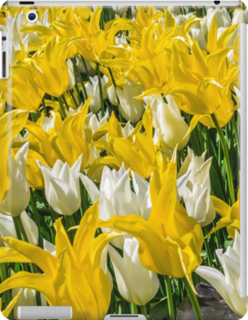Rays of Spring Tulips by Owed To Nature