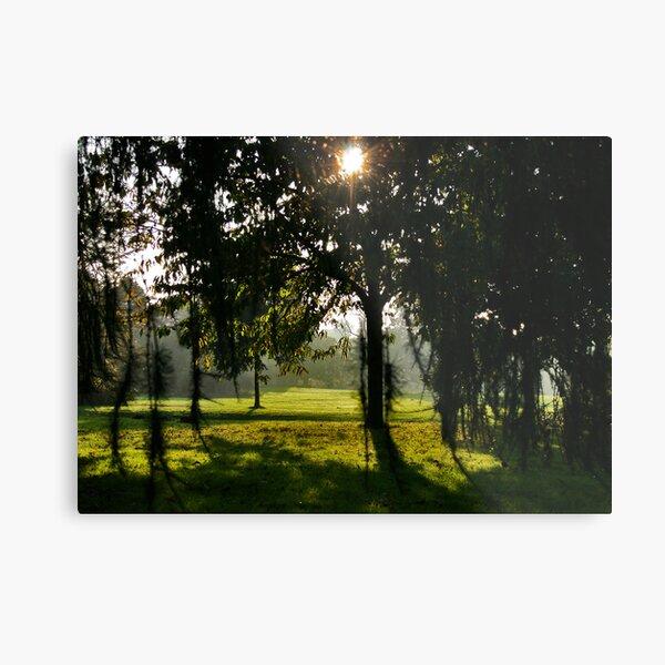 Sunlight and Shade Metal Print
