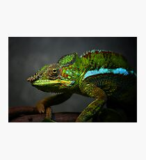 Creeping Chameleon Photographic Print