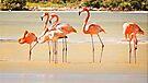 Flamingos at Rio Lagartos by Yukondick