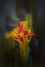 Spotted Canna Lily by Elaine Teague