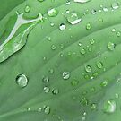 Rain on a leaf by RuthBaker