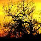 Tree by Abigail Hiebert