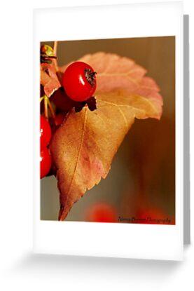 Autumn Harvest by Nancy Barrett