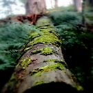"""Moss Log inside """"The Pyrenees"""" by cjcphotography"""