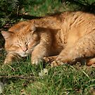 It's all about the cat nap! by Pamela Jayne Smith