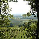 Vineyards of Saint-Croix du Mont  by 29Breizh33