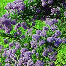 Purple  and  Green by Alexander Mcrobbie-Munro
