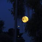 Beautiful Morning Moon 3/3 by down23