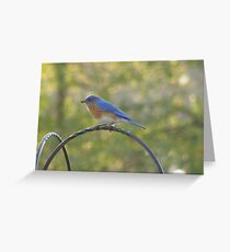 Days of our Bluebirds - The Pilot Greeting Card