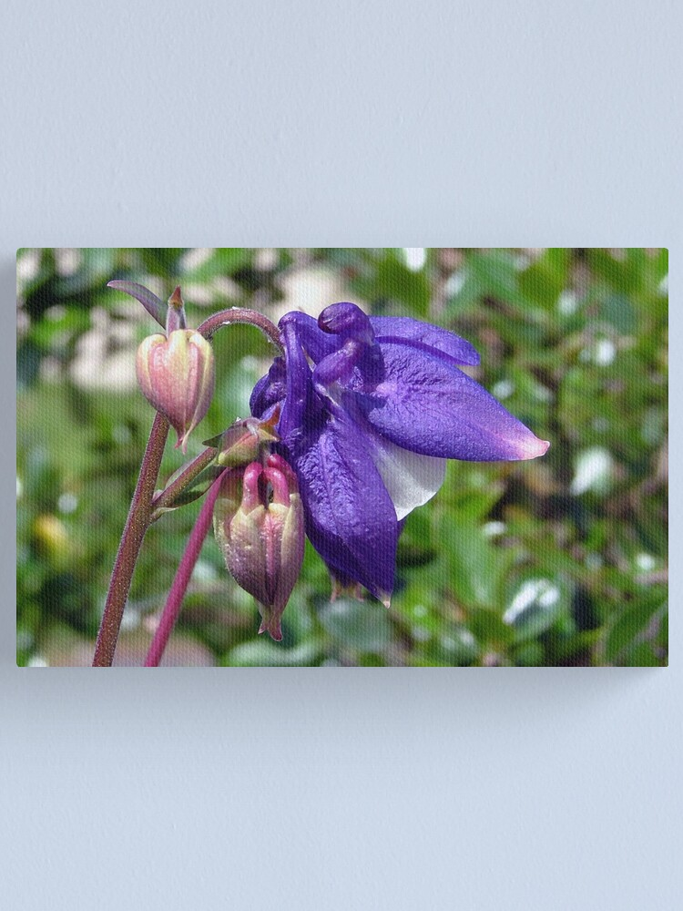Alternate view of Blue  or  Purple ? Canvas Print