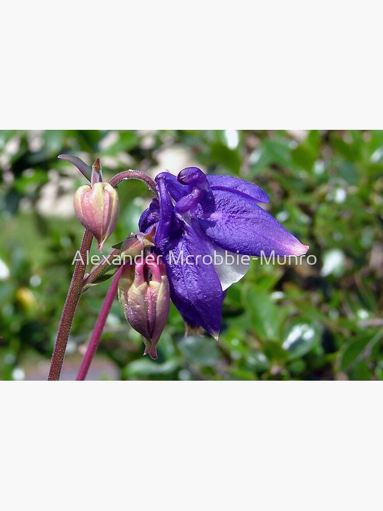 Blue  or  Purple ? by Alexanderargyll