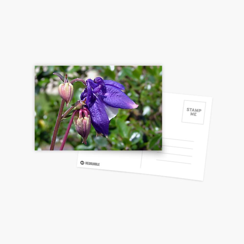 Blue  or  Purple ? Postcard