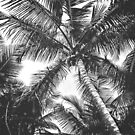 Black and White Palm Trees by Jonicool
