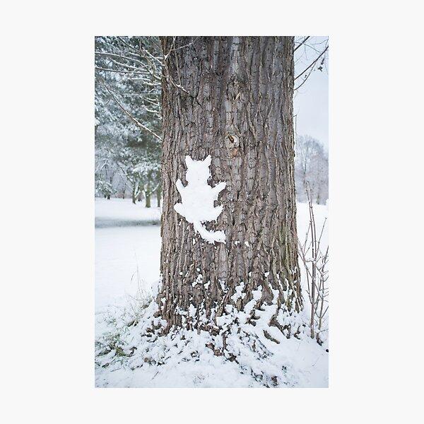 Schneekatze Fotodruck