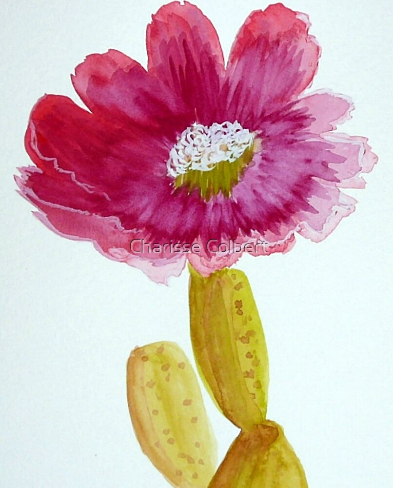 Cactus Flower by Charisse Colbert