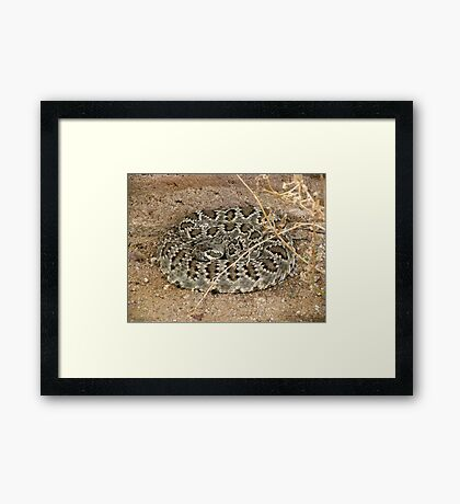 Mohave Rattler ~ Deadly Patience Framed Print