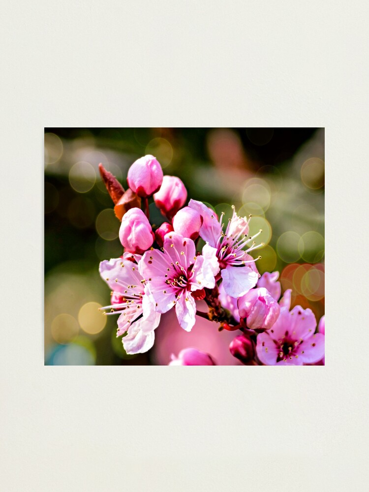 Alternate view of A sign of Spring. Photographic Print