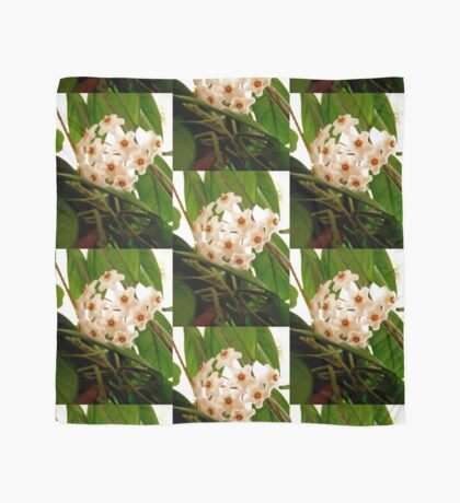 Hoya flowers Scarf