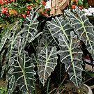 Garden Plant by Linda Miller Gesualdo