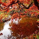 Fall Reflection by AnnDixon