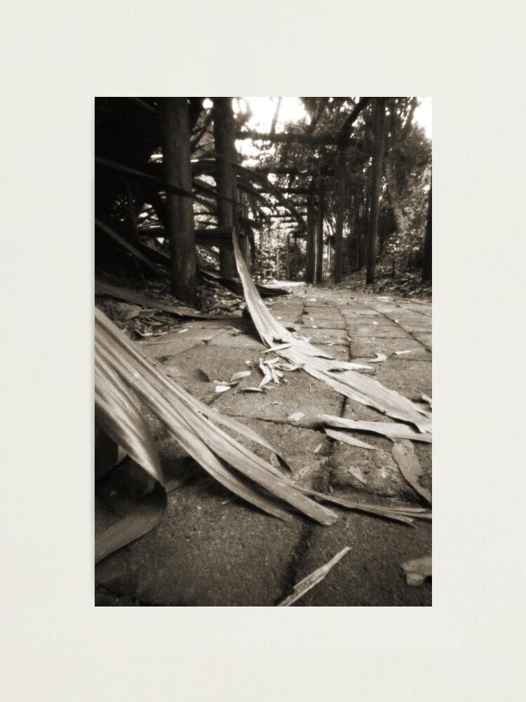 Alternate view of Walkway Photographic Print