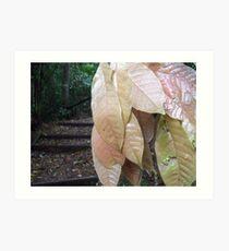rainforest walk Art Print