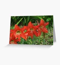 Cooktown Botanical Gardens Greeting Card