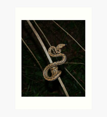 Coastal Carpet Python Art Print