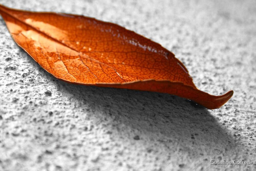 orange leaf by Susanne Correa