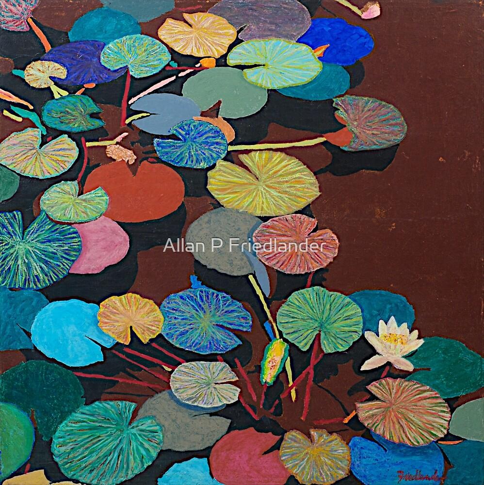 Slow Stream by Allan P Friedlander